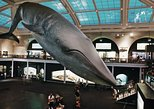 Skip-the-line Museum of Natural History Guided Tour - Semi-Private 8ppl Max