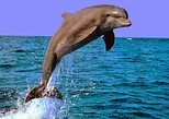 Dolphin Watching in Lovina and Gitgit Waterfall Tour