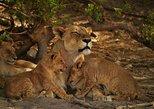 2-Day Camping Safari in Chobe National Park from Victoria Falls