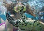 Mystery Island Snorkeling Tour