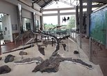 Centro de Investigaciones Paleontologicas - CIP Admission Ticket
