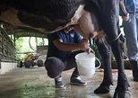 Central America - Costa Rica: Costa Rica Campesino Farm Tour