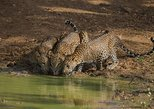 All Inclusive Private Full Day Safari in Yala National Park with Lunch