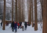 """Premium Private Tour"" Nami Island, Garden of Morning Calm and Petite France"