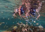 Guided Snorkeling Tour on a Tropical Reef