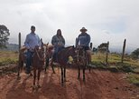 Guatapé tour & Horseback riding from Medellín