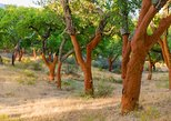 Walk on the Alentejo Cork Forest with Optional Lunch