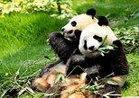 Day Tour: Chengdu Panda Breeding Base and Leshan Giant Buddha