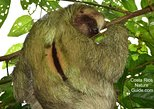Private Expedition in the Arenal Volcano Region by Costa Rica Nature Guide(VIP)