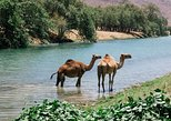 East Jewels of Salalah with Wadi Darbat :Oman Shore excurions