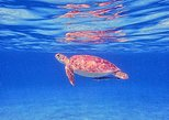Morning Private Half-Day Snorkeling Charter for Cruise Ship Guests
