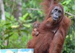 Day Trip Through the Wilderness Borneo & Say Hello Orang Utan
