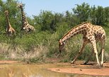Africa & Mid East - South Africa: Pilanesberg Safari Day Trip from Johannesburg or Pretoria