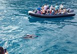 3-Hour Whale Watch Discovery Raft Tour