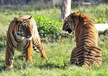 1-Night Private Tour to Ranthambhore Tiger Safari from Jaipur