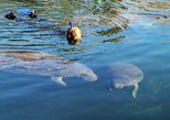 Manatee swim and snorkel Guided Crystal River Tour