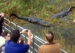 Central Florida Everglades Airboat Tour and Alligator Encounter from Orlando