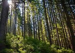 Hiking in the Carpathian Mountains near Yaremche