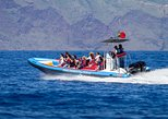 Delfin- und Walbeobachtung an Bord eines Speed-Boats in Funchal