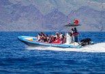 Beobachtung: Delfine - Wale - Schildkröten -vögel