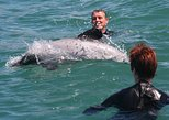 Akaroa Dolphin Swimming and Alpaca Farm Day Tour from Christchurch