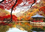 Naejangsan National Park tour in Autumn: Find the best Fall Leaves