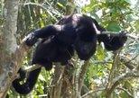 Howler Monkeys and Mayan Adventure