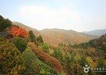 Odaesan National Park hiking day tour: Explore Autumn foliage Korea