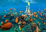 Snorkel & Swim with the Turtles. Private Tour to Buck Island and Honeymoon Beach