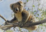 Kangaroo Island Shore Excursion Scenic Trail Tour