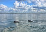 Hilton Head Island Private Dolphin Tour