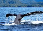 Sitka's Spring Herring Return: Private Whale Watching & Marine Wildlife Tour