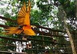 Airport Cataratas IGU Pick-Up & Iguassu Falls Brazilian Side & Bird Park