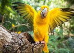 Bird Park & Iguassu Brazilian Side - Private Tour