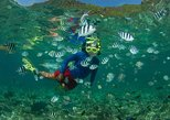 Linapacan Snorkeling and Island Tour