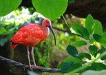 The Scarlet Ibis - Caroni Swamp Tour