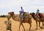 Camel Safari - Camel Ride