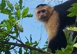 aquatic tour gatun lake and monkey island