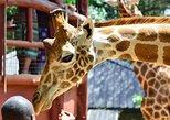 Day tour to Elephant orphanage and giraffe centre Nairobi