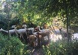 2 Hour Alpaca Experience