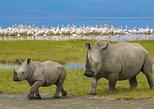 Ngorongoro Crater Day Trip