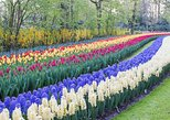 Private Keukenhof Layover - Holland
