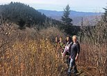 Hike in the Blue Ridge Mountains with a top Local Guide