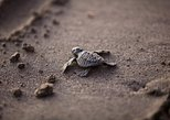 Turtle conservation in Costa Rica on a guided 12 day tour