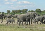 Africa & Mid East - Botswana: 7 Days Big Five Safari Experience