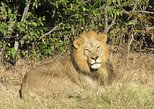 Africa & Mid East - Botswana: 9 Days Lion Safari