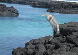 4- Day Santa Cruz Galapagos Island Hopping Express