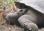 5 Day Trip in San Cristobal Galapagos Land-based Express