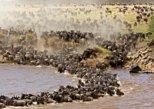 17 Days Serengeti Migration ( Mara River Crossing Experience) & Kilimanjaro Climb, 2019