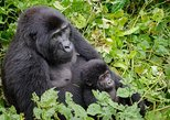 3 Days Bwindi Impenetrable Gorilla National Game Park Tour